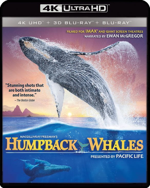 Humpback Whales 4K HDR 2015 Ultra HD